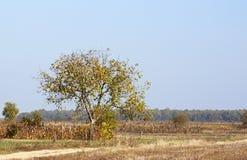 Tree in autumn - RAW format Stock Photo