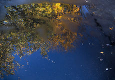 Tree with autumn reflected in puddle Royalty Free Stock Photography