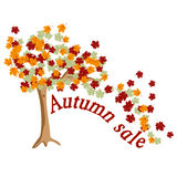 Tree autumn sale Royalty Free Stock Images