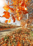 Tree autumn scenery Royalty Free Stock Photo