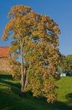 tree in autumn season Stock Images