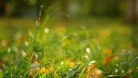 Autumn garden leaves stock video