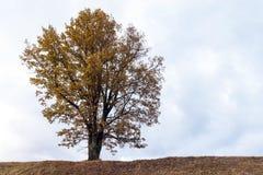 Tree autumn season Stock Image