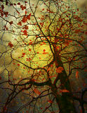 Tree with autumn sheet in ray sun Royalty Free Stock Images