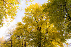 Tree in autumn Stock Images