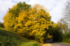 Tree in autumn Stock Image