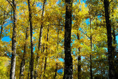 Tree in autumn Stock Photos