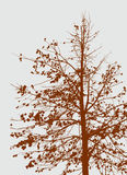 Tree in the autumn Royalty Free Stock Photo