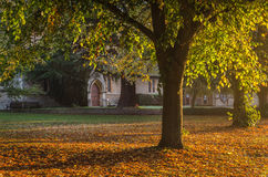 Tree in Autumn, yellow leaves and big church door Stock Photos
