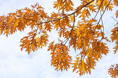 Tree in autumnal colors Stock Image