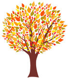 Tree av hösten Royaltyfri Fotografi