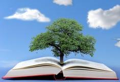 Tree av kunskap Fotografering för Bildbyråer