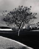 Tree av liv Arkivfoton