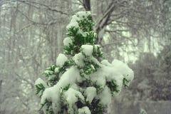 Tree av liv Royaltyfri Fotografi