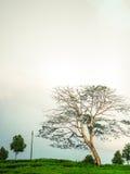 Tree av liv Royaltyfri Bild