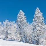 Tree av snowtownen Royaltyfri Bild