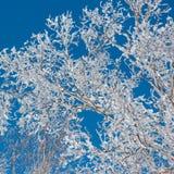 Tree av snowtownen Arkivfoto