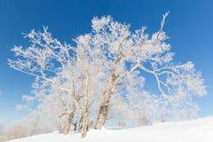 Tree av snowtownen Arkivbild