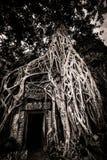 Tree av Ta Prohm, Angkor Wat Royaltyfria Bilder