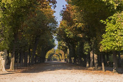 Tree Avenue. In the Schönbrunner castle park in Vienna there are wonderful tree avenues Stock Photo