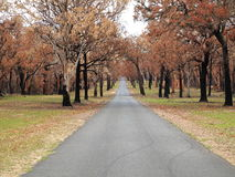 Tree-lined road landscape after bush fire Royalty Free Stock Photos