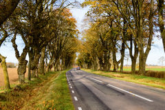 Tree avenue. A car is driving away from you on a fine stretch of farmland tree avenue or alley in the autumn. The trees have some yellowing leaves left on them royalty free stock photo