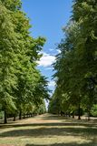 Tree avenue in city park. In the summer royalty free stock photo