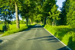 Tree avenue of a country road in Hesse, Germany stock image