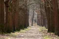 A tree avenue. In a Park stock image
