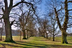 Tree avenue in park Royalty Free Stock Images