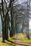 Tree avenue in a park in winter. Picture of a tree avenue in a park in winter with an unrecognizable pedestrian royalty free stock photo