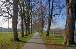 Tree avenue path, The Groe Builth Wells Wales UK. Stock Images