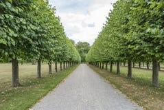 Tree avenue in summer. Garden stock photos
