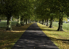 Tree Avenue. Avenue of Trees in an English garden Royalty Free Stock Photography