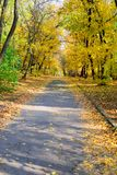 Tree avenue. Watching the road royalty free stock photography