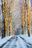 Tree avenue at winter time. Picture of a tree avenue at winter time stock photos