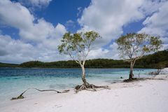 Tree at awesome freshwater lake. In Great Sandy National Park - Fraser Island, Lake McKenzie, QLD, Australia Royalty Free Stock Image