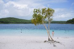 Tree at awesome freshwater lake stock photos