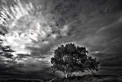 Tree in b&w. Lonely tree before the storm royalty free stock photo
