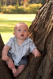 Tree Baby Royalty Free Stock Photos