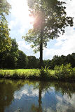 Tree in back light reflecting on a pond calm surface Royalty Free Stock Photography