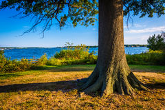 Tree and the Back River at Cox Point Park, Essex, Maryland. Royalty Free Stock Photo