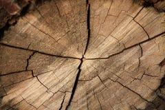 Tree backgound stock photo