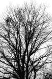 Tree background Royalty Free Stock Photo
