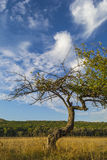 Tree on a background of blue sky with clouds. Royalty Free Stock Photos