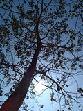 Tree on background of blue sky and sun royalty free stock photo