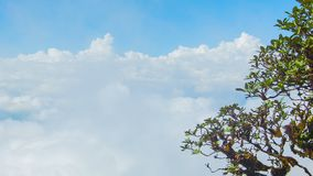 Tree on a background of clouds. View from the top of the mountain. Thailand, Chiang Mai Stock Images