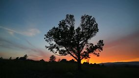 Tree on background evening sky. Panorama stock video footage