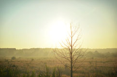 Tree on a background of the fields before the approaching sunset Stock Photos