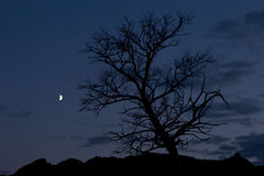 Tree on background night sky Royalty Free Stock Photo
